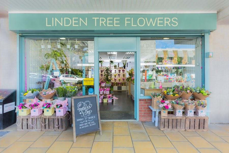 Linden Tree Flowers