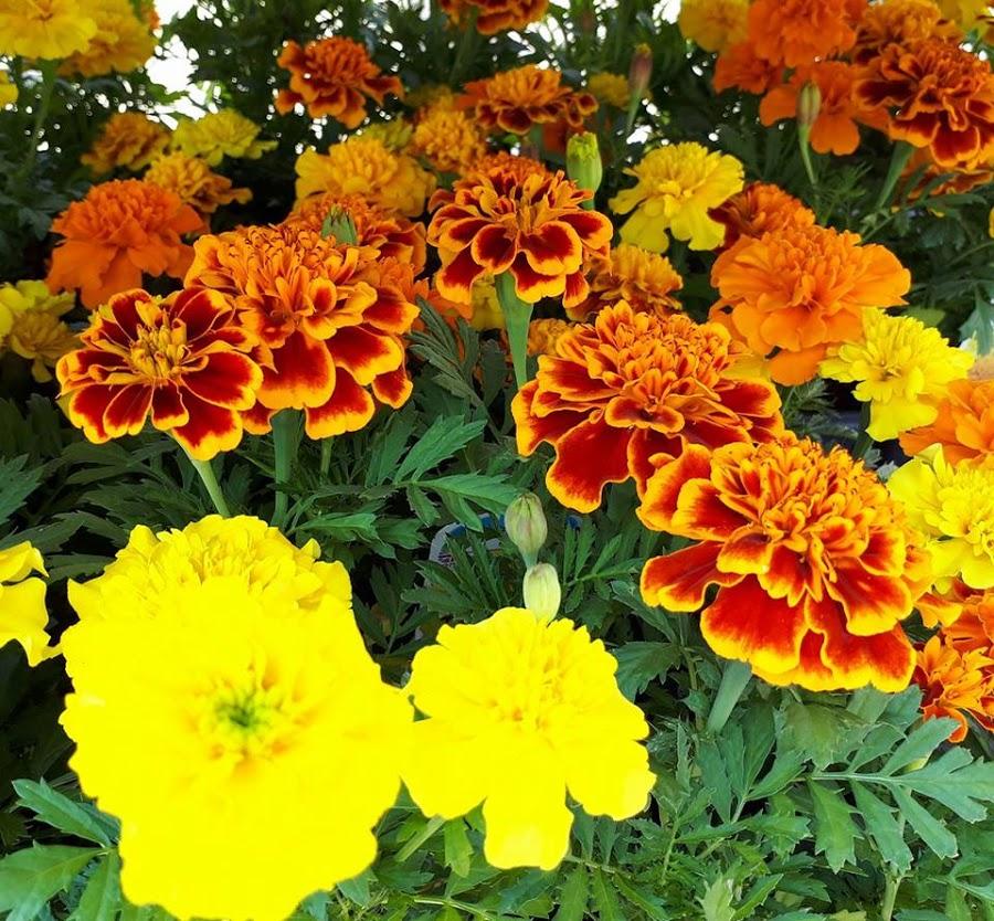 Rosies Florist