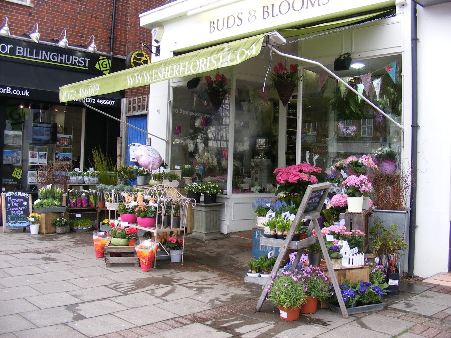 Buds and Blooms of Esher